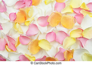 Rose petals background - Abstract background of fresh...