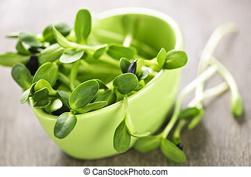 Green sunflower sprouts in a cup - Organic green young...