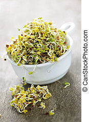 Alfalfa sprouts in a cup