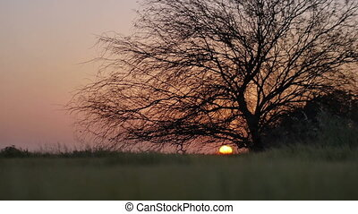 rural landscape, tree on sunset background