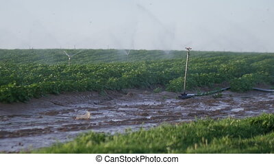 irrigation of agricultural field closeup