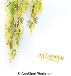 Yellow mimosa background. - Yellow mimosa or acacia spring...