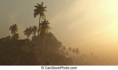 fog glowing sun and palms