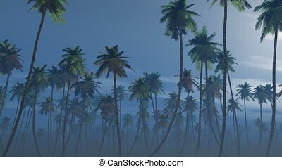 Mysterious foggy palm forest