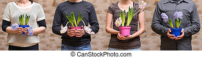 four people holding hyacinths - four people are holding...