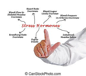 Effects of Stress Hormones