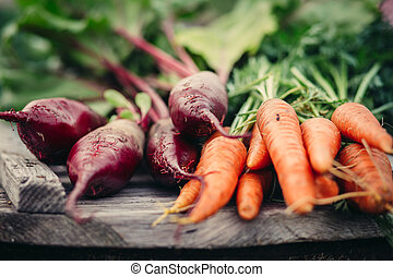 Rustic Fresh harvest of carrots.