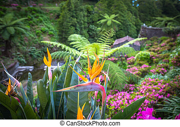 Garden on Sao Miguel island, Azores. It is located in the...