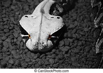 serpiente, ojos