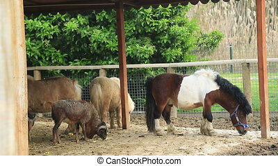 Farm animals feeding - Different farm animals eating grass...