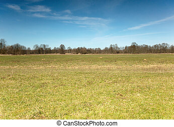 Meadow in early spring - Poland, Fresh green grass in the...