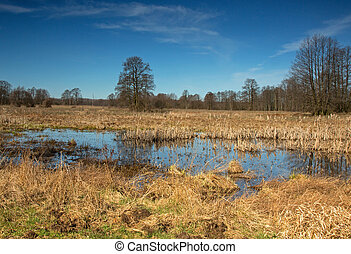 Spring flood in the meadows early spring - Poland in...