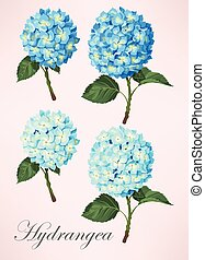 Set of hydrangea flowers - Small vector set of detailed...