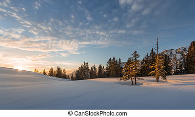 trees lighted from sunset at snow field in winter at tannheim