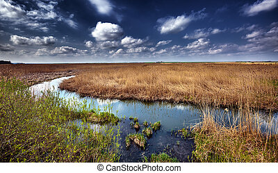 Marshes and reed - Landscape with marshes and reed under...