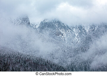 Mountain peaks covered with pine forests and surrounded by...