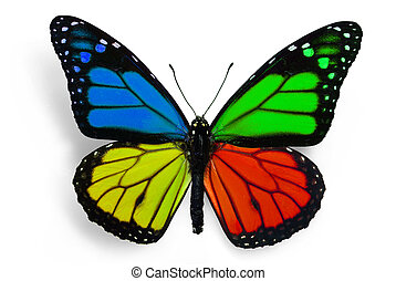 fantasy butterfly - true butterfly with fantasy colours