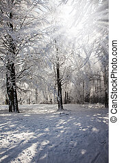 The forest glade which is filled up with snow. Solar winter...