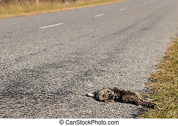 cat roadkill lying on side of road - closeup of cat roadkill...