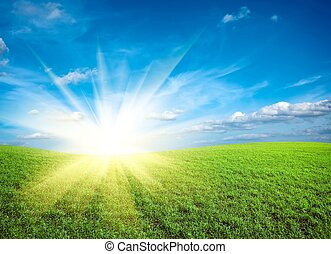 Sunset on field of green fresh grass under blue sky