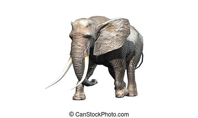 Elephant - 3D CG rendering of a elephant