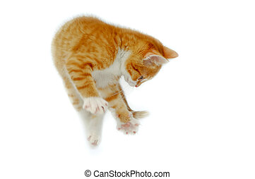 Jumping kitten - A sweet kitting is jumping into the air....