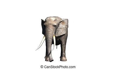 Elephant - 3D CG rendering of a elephant