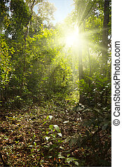 Sunlight in tropical jungle forest