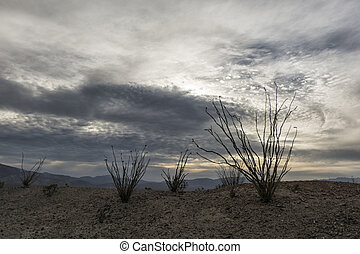 Landscape in the Anza-Borrego Desert - Desert Plant in...