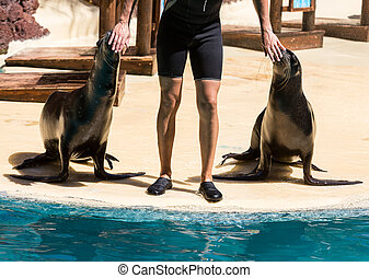 Shows sea lions in the pool