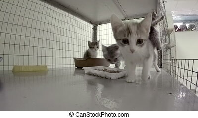 Little kittens in a cage at the animal shelter - The little...