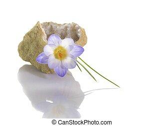 Crocus in quartz geode - Beautiful crocus flower in quartz...