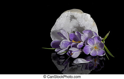 Crocus flowers and quartz geode - Beautiful crocus flowers...