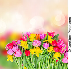 bouquet of pink, purple and red tulips - bunch of fresh...