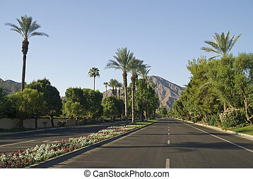 Indian Wells Roadway - Rows of Palm trees, mountains,...