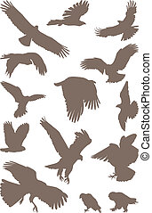 Birds predator - isolated silhouettes of bird predator on...