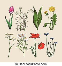 Vintage hand drawn flowers and herbs