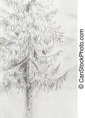 pencil drawing spruce on old paper background. - pencil...