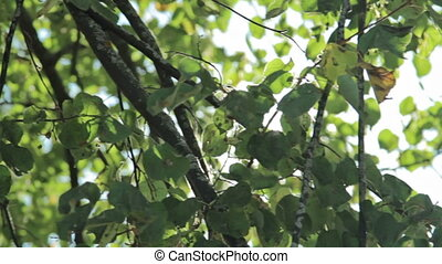 Sun shine through the blowing on wind tree green leaves -...