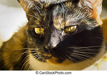 Calico cat portrait - The portrait of calico cat