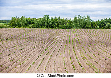 Country farm landscape - plowed field and trees Agriculture...