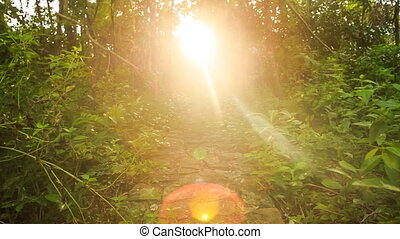 Sun Reflection Spot Moves from Path to Sunlight at Background