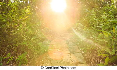Sunlight through Tropical Plants Old Stone Path at Backlight