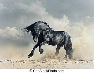 Wild black stallion