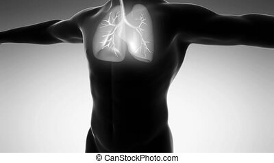science anatomy of man body with glow lungs