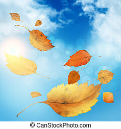 Autumn background - Background image with yellow leaves...
