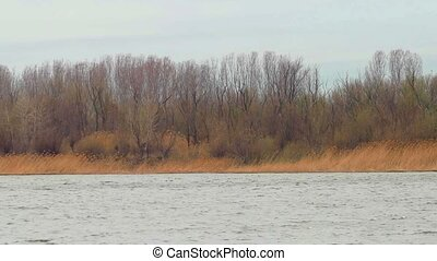 Riverbank covered with bare trees and group of tourists...