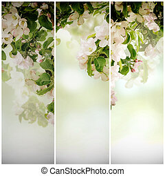 Apple floral background - Fresh spring branches of apple...