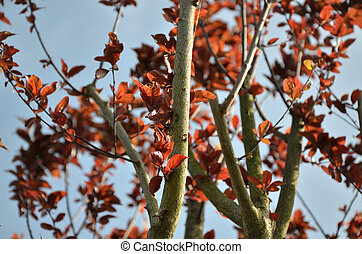 Reddish Tree Branches and Sky