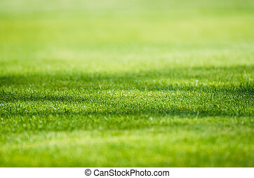 Green grass field background - Sunny green grass field...